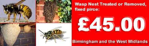 Wasp Control Birmingham, Wasp nest treatment or removal fixed price £45.00 covering Birmingham, Sutton Coldfield and the west Midlands. Contact us on  0121 450 9784 for more info